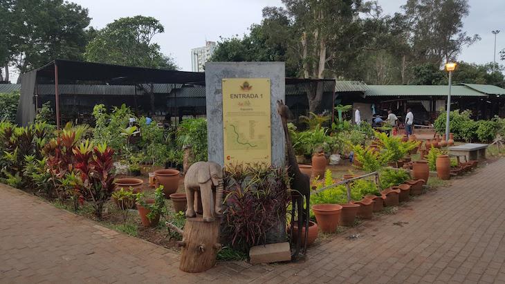 Plantas na Feira de Artesanato de Maputo © Viaje Comigo