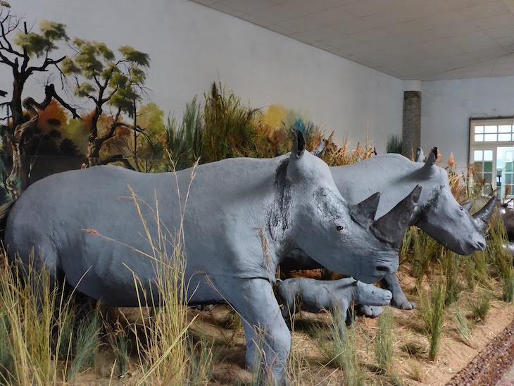 Museu de História Natural de Maputo © Viaje Comigo
