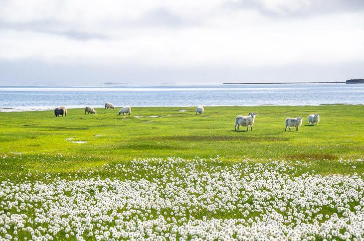 Islândia © Fotoviajar