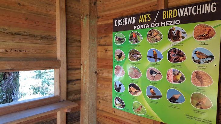 Observação de aves na Porta do Mezio © Viaje Comigo