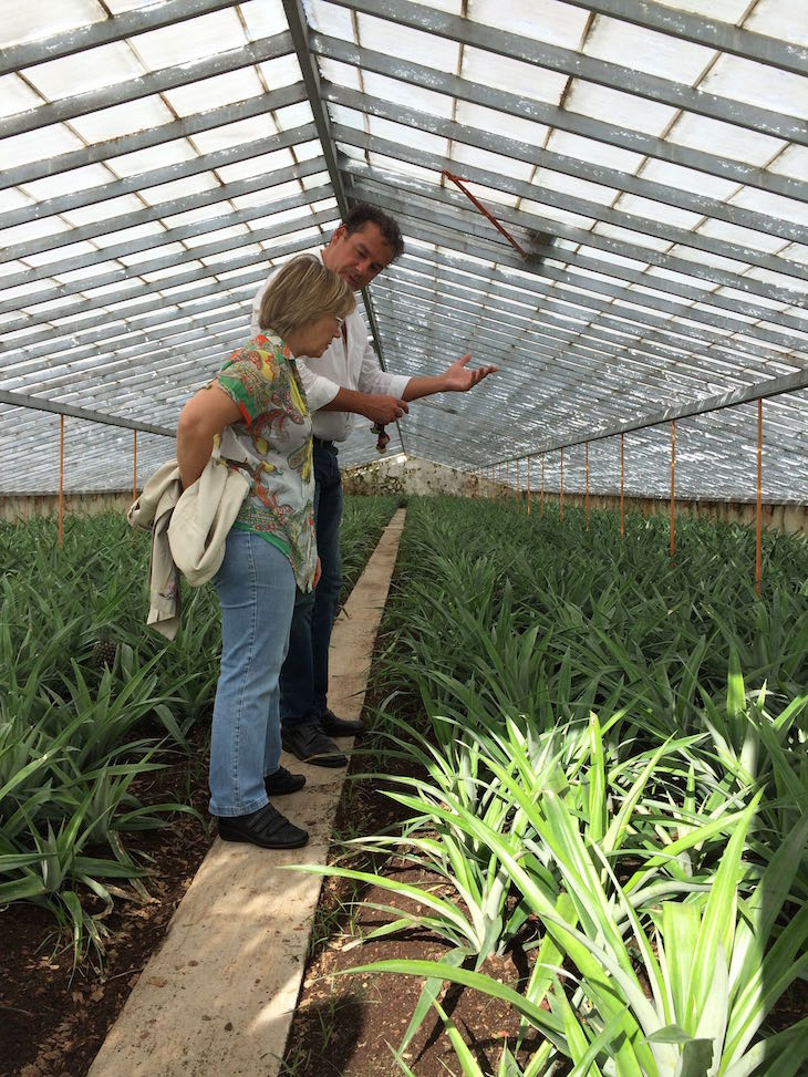 A chef Justa Nobre na plantação de ananases  - Açores © Viaje Comigo