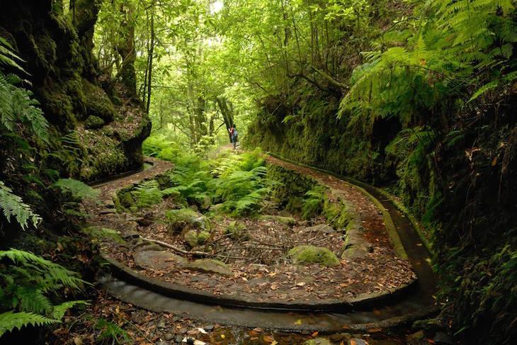 Levadas © Visit Madeira