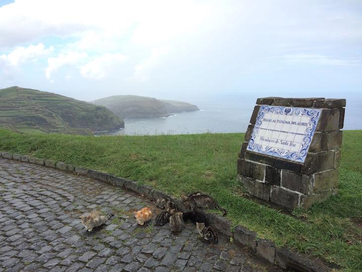 Gatinhos no Miradouro de Santa Iria - Ribeira Grande. S. Miguel, Açores © Viaje Comigo