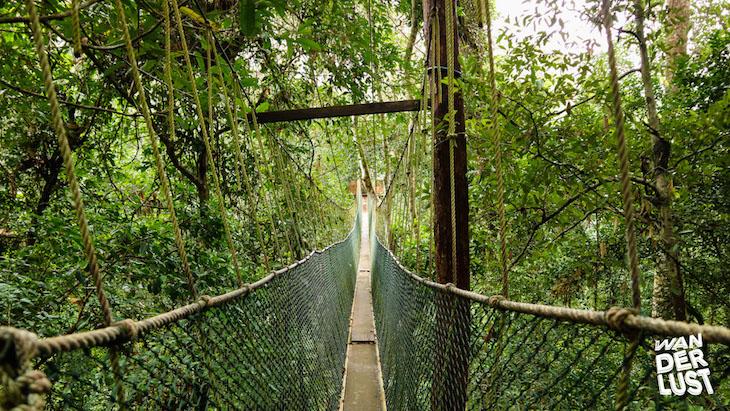 Taman Negara © thewanderlust