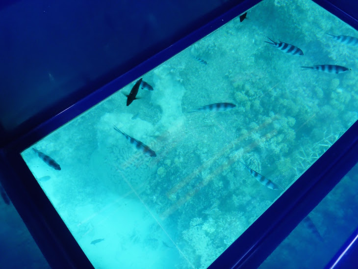 Passeio no barco com fundo de vidro - Beachcomber Resort & Spa, Ilha Maurícia © Viaje Comigo