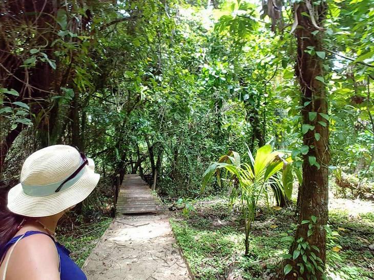 Isla Bastimentos, Bocas del Toro, Panamá © Viaje Comigo