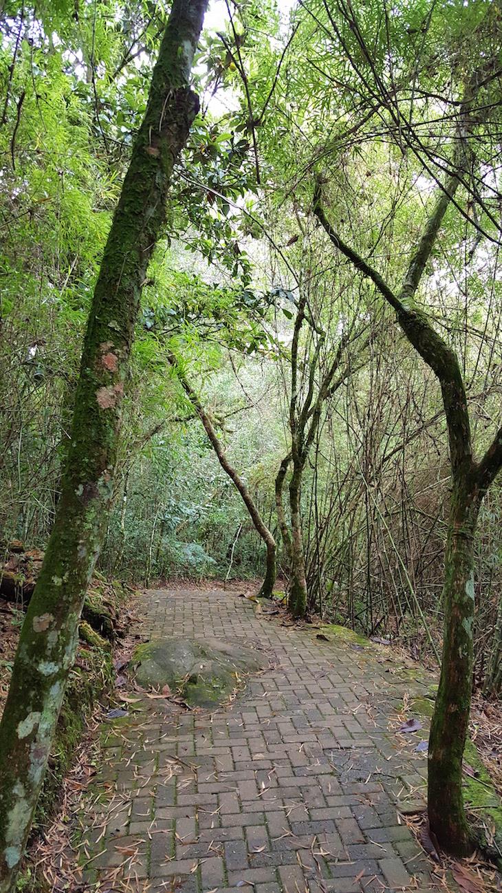Parque do Caracol - Canela - Brasil © Viaje Comigo