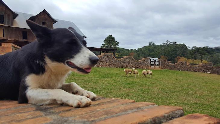 Casa da Ovelha - Bento Gonçalves - Rio Grande do Sul - Brasil © Viaje Comigo