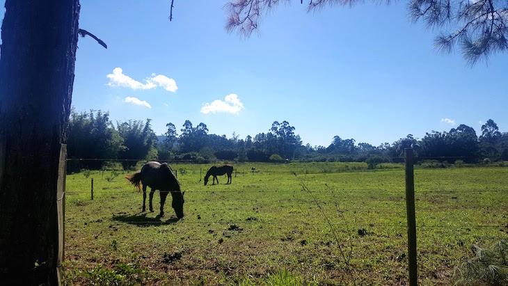 Cavalos da Granja da Lia - Caminhos Rurais Porto Alegre - Brasil © Viaje Comigo