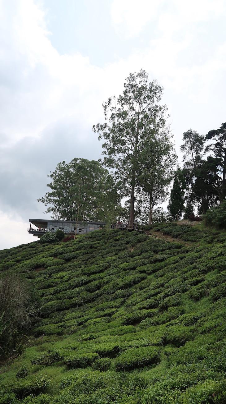 Campos de chá BOH em Cameron Highlands - Malásia © Viaje Comigo