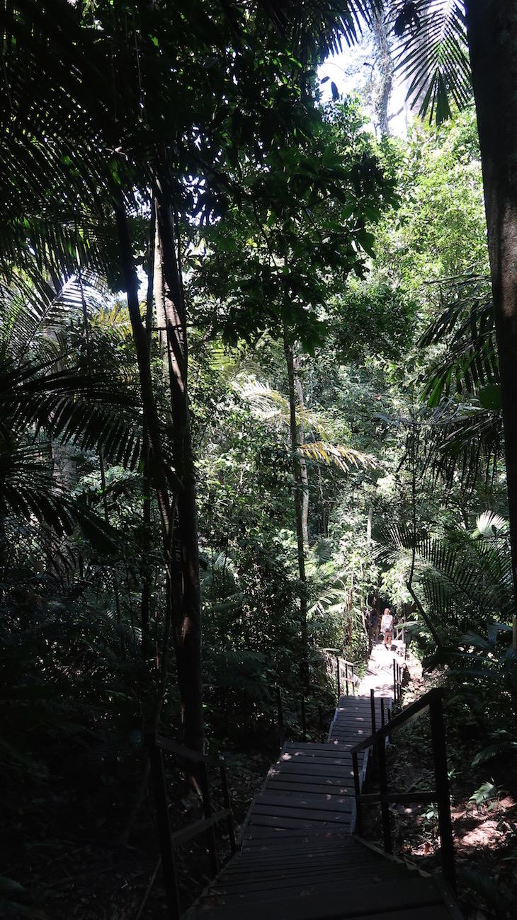 Taman Negara, Parque Nacional Kuala Tahan, Malásia © Viaje Comigo