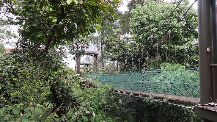 Ponte Eko Rimba- Kuala Lumpur - Malásia © Viaje Comigo