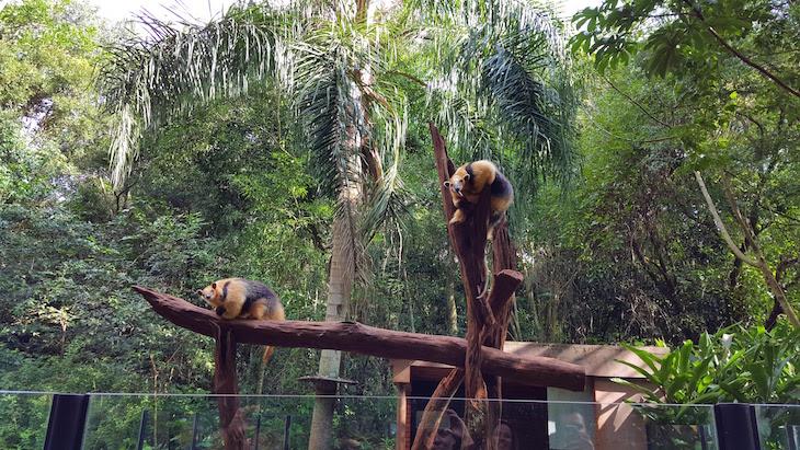 Refúgio Biológico Bela Vista, Foz do Iguaçu, Brasil © Viaje Comigo