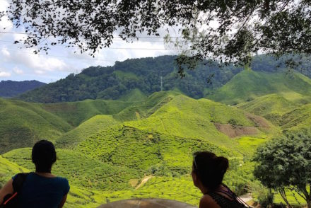 Cameron Highlands - Malásia © Viaje Comigo