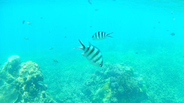 Snorkeling nas Perhentian - Malasia © Viaje Comigo