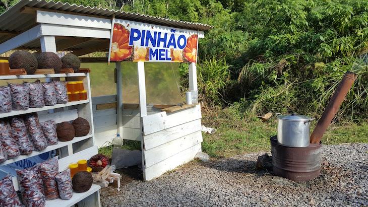 Pinhão na Serra Gaúcha, Brasil © Viaje Comigo