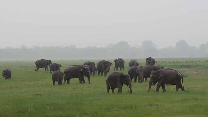 Minneriya National Park, Sri Lanka © Viaje Comigo