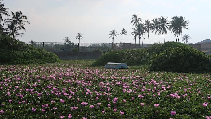 Na praia do Club Hotel Dolphin - Sri Lanka © Viaje Comigo