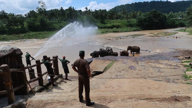 Banho no rio - Orfanato de Elefantes em Pinnawala - Sri Lanka © Viaje Comigo