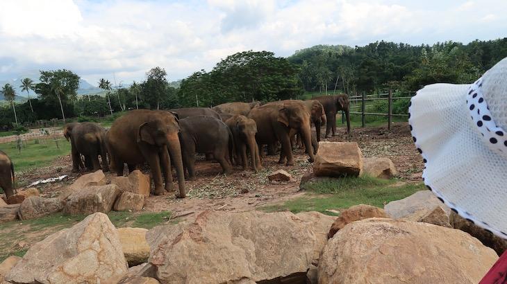 Orfanato de Elefantes em Pinnawala - Sri Lanka © Viaje Comigo