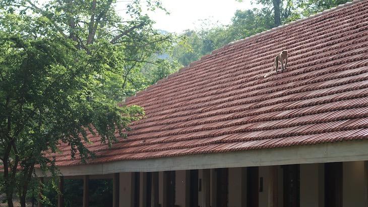 Zinc Journey Sigiriya - Sri Lanka © Viaje Comigo