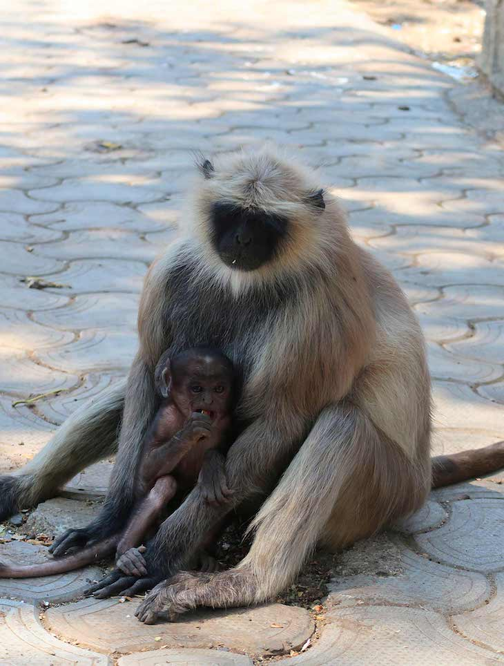 Grutas Ellora - Aurangabad - India © Viaje Comigo