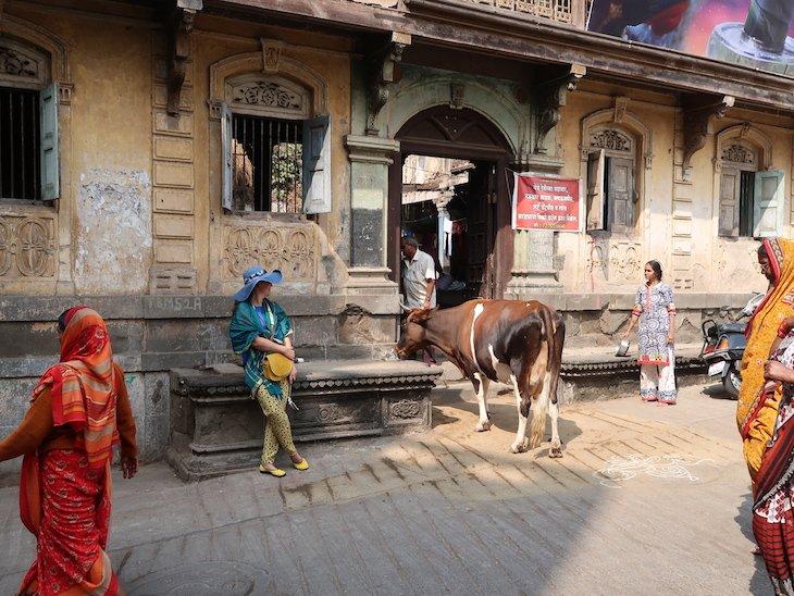 Nashik -Maharashtra- India © Viaje Comigo