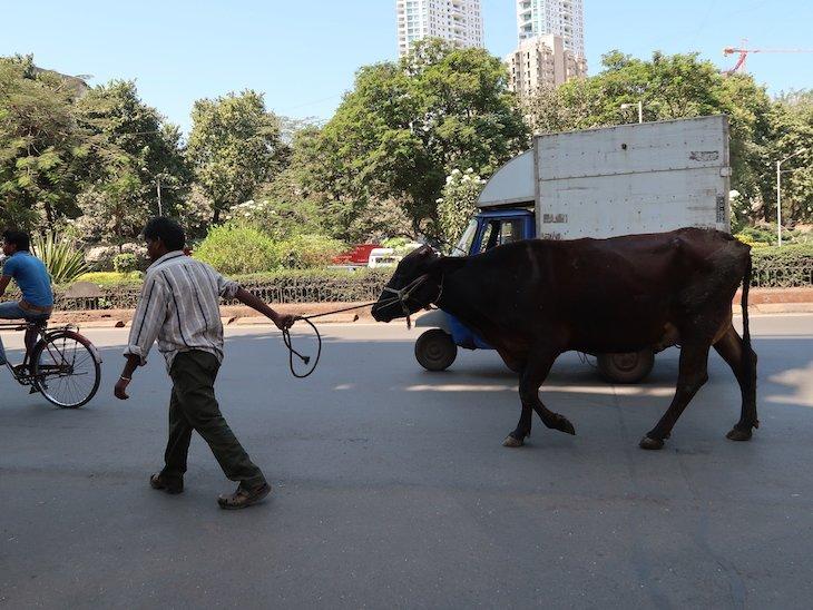 Vacas nas ruas em Bombaim - India © Viaje Comigo