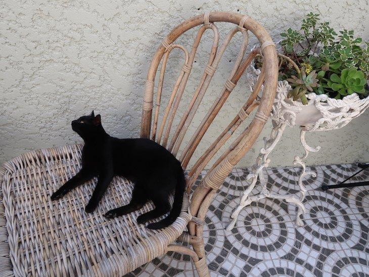 Gato na esplanada - Porto dos Gatos © Viaje Comigo