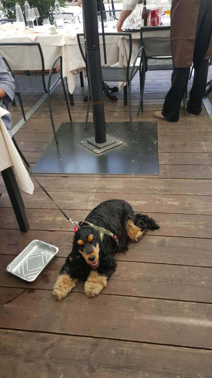 Cães nas esplanadas em Vigevano - Itália © Viaje Comigo