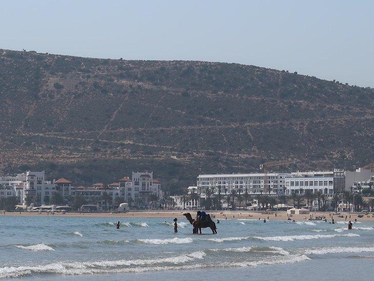 Dromedário no mar - Agadir - Marrocos © Viaje Comigo.JPG
