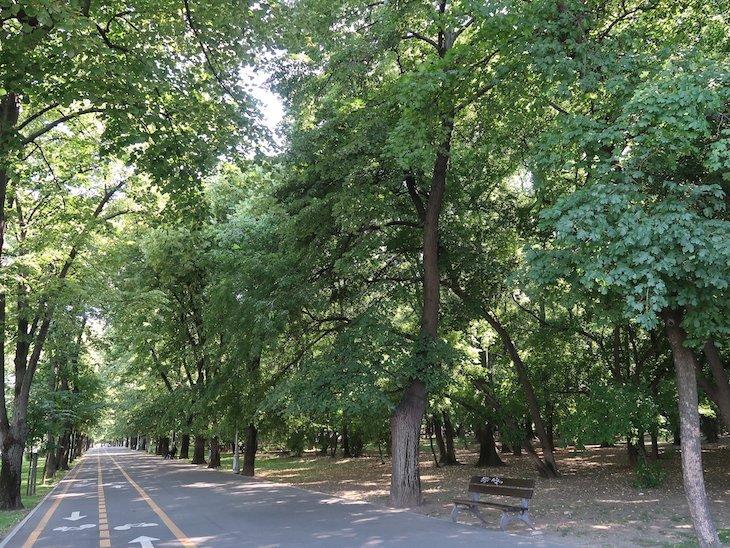 """Avenidas """"verdes em Bucareste - Roménia © Viaje Comigo"""