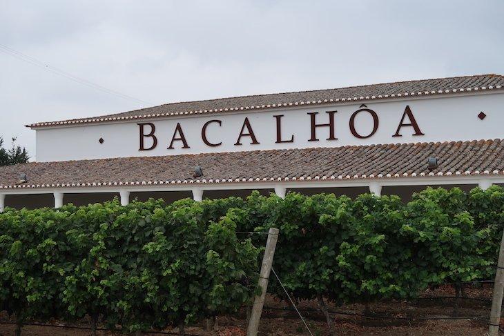 Bacalhôa - Azeitão - Portugal © Viaje Comigo