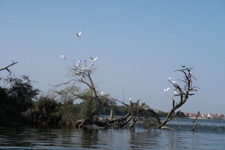 Passeio de barco - Região Vitivinícola do Tejo © Viaje Comigo
