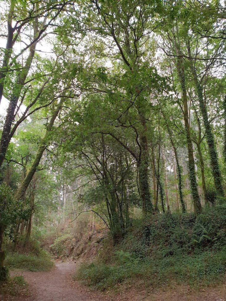 Floresta nas Salinas de Ulló - Pontevedra - Galiza © Viaje Comigo