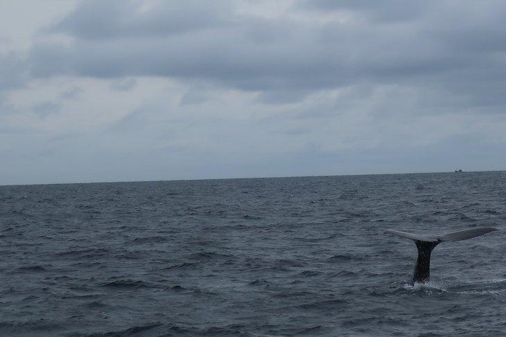 Observação de baleias, Mirissa - Sri Lanka © Viaje Comigo