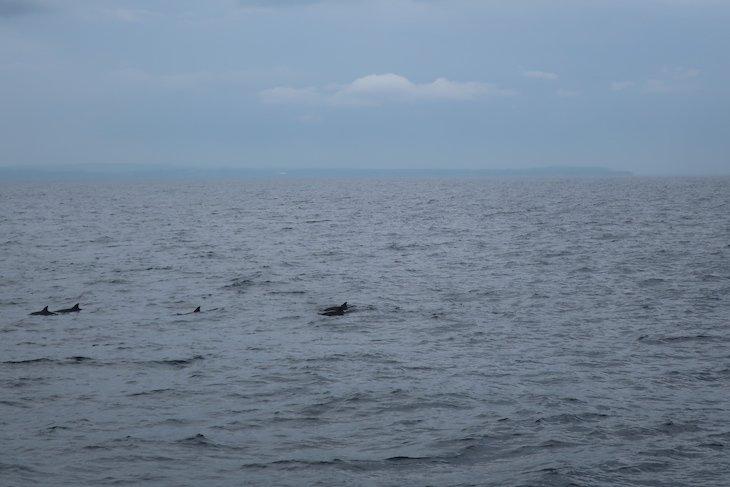 Golfinhos em Mirissa - Sri Lanka © Viaje Comigo