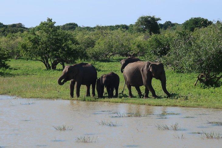 Yala National Park - Sri Lanka © Viaje Comigo