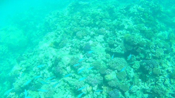 Snorkeling Giftun Island - Egito © Viaje Comigo