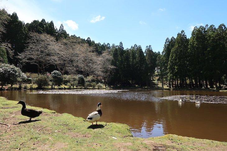 Lagoa das Patas - Terceira - Açores © Viaje Comigo