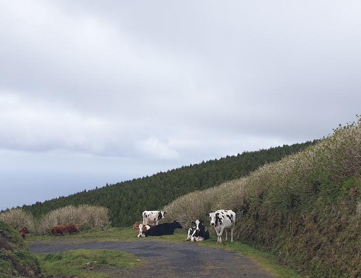 Ilha do Faial - Açores © Viaje Comigo