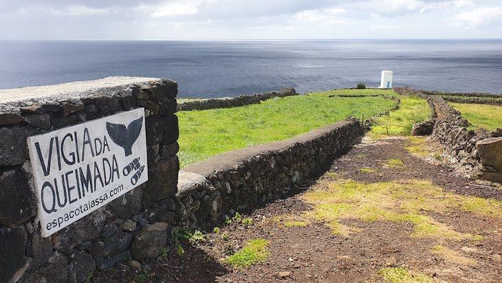 Vigia da Queimada - Ilha do Pico - Acores © Viaje Comigo