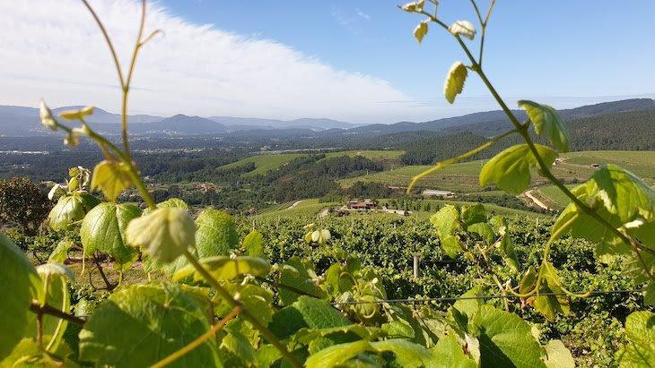 Altos de Torona - Rias Baixas - Galiza - Espanha © Viaje Comigo