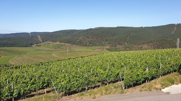Vinhas de Altos de Torona - Rias Baixas - Galiza - Espanha © Viaje Comigo