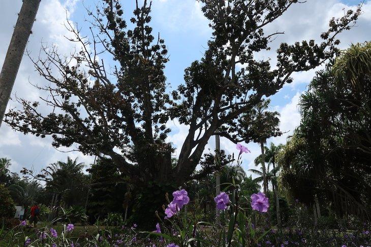 Jardim Botânico Nacional de Cuba, Havana © Viaje Comigo