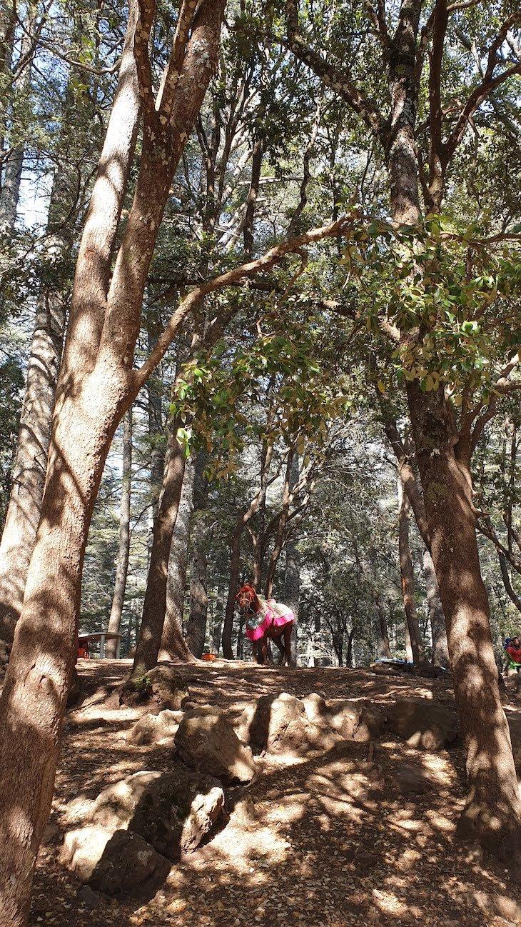 Parque Nacional de Ifrane - Marrocos © Viaje Comigo