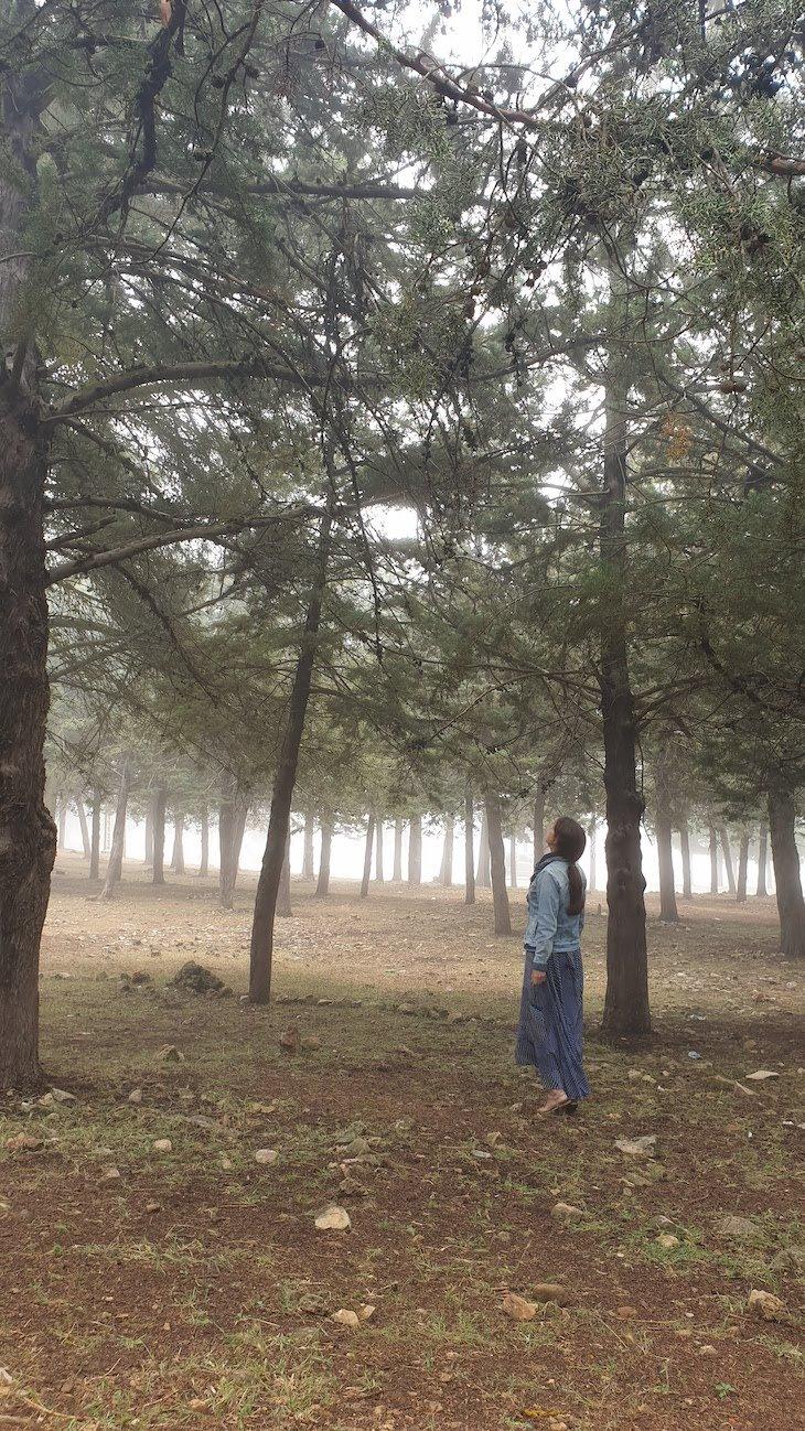 Floresta a caminho de Ifrane - Marrocos © Viaje Comigo