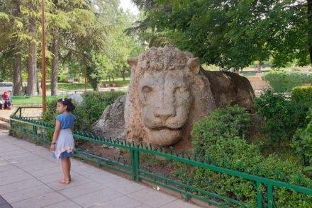Leão em Ifrane - Marrocos © Viaje Comigo