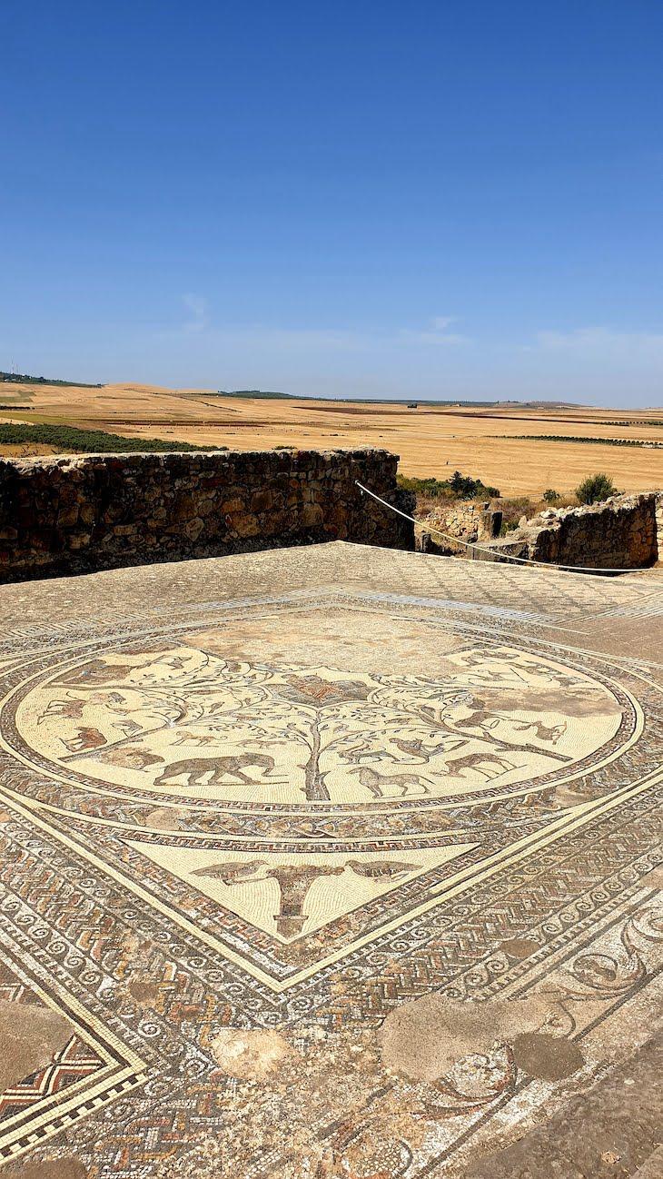 Volubilis - Marrocos © Viaje Comigo