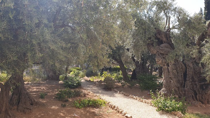 Jardim Getsemani - Monte das Oliveiras - Jerusalém - Israel © Viaje Comigo